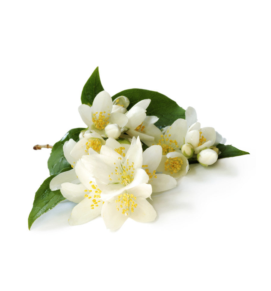 Jasmine Absolute 3% in Jojoba Oil