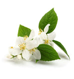 Jasmine Natural Fragrance Oil - New Zealand Candle Supplies