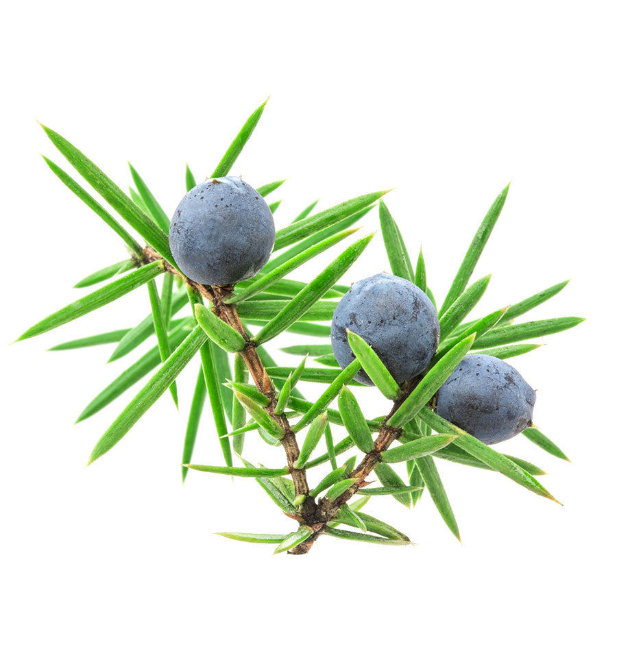 Juniper Berry Natural Fragrance Oil - New Zealand Candle Supplies