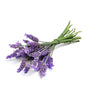 Lavender Essential Oil - New Zealand Candle Supplies