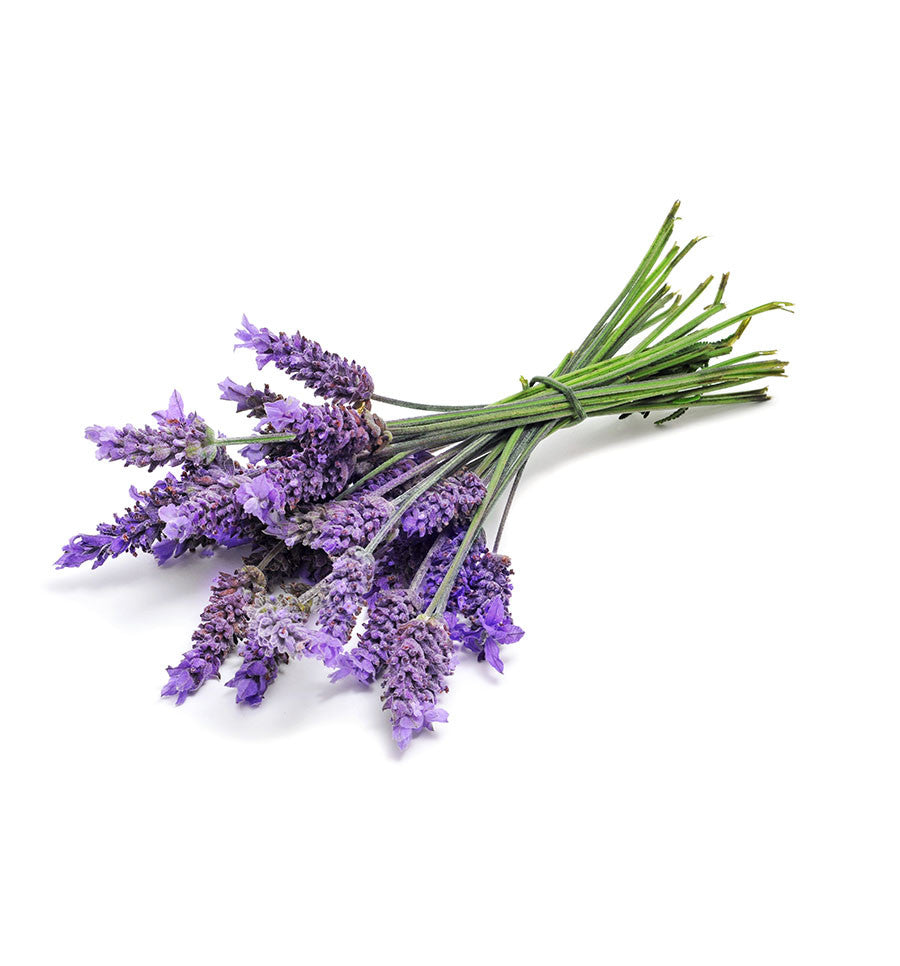 French Lavender Natural Fragrance Oil - New Zealand Candle Supplies