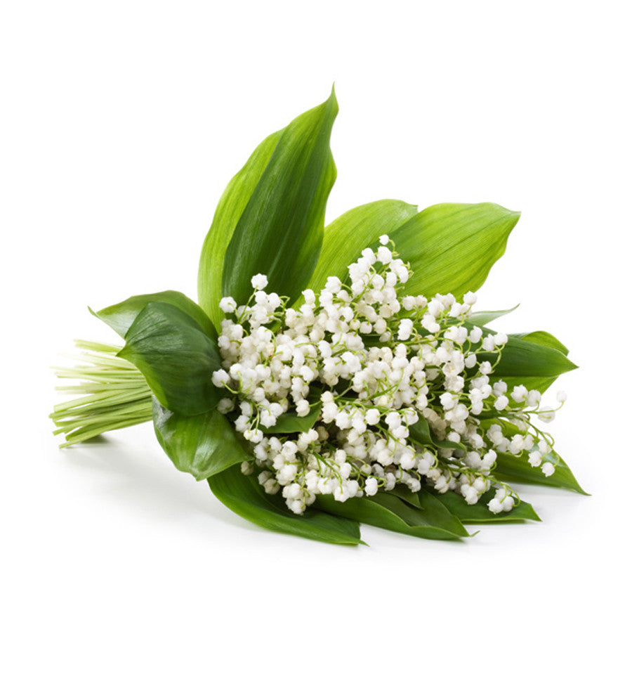 Lily of the Valley Natural Fragrance Oil - New Zealand Candle Supplies