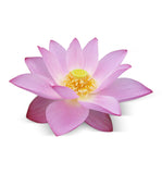 Lotus Flower Single Note Natural Fragrance Oil - New Zealand Candle Supplies
