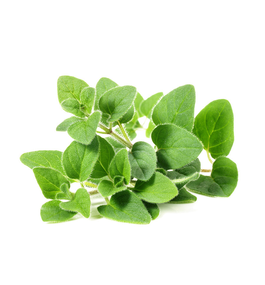 Marjoram Essential Oil - New Zealand Candle Supplies