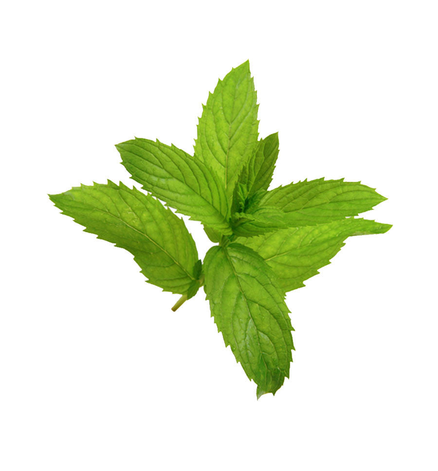 Menthol Essential Oil - New Zealand Candle Supplies