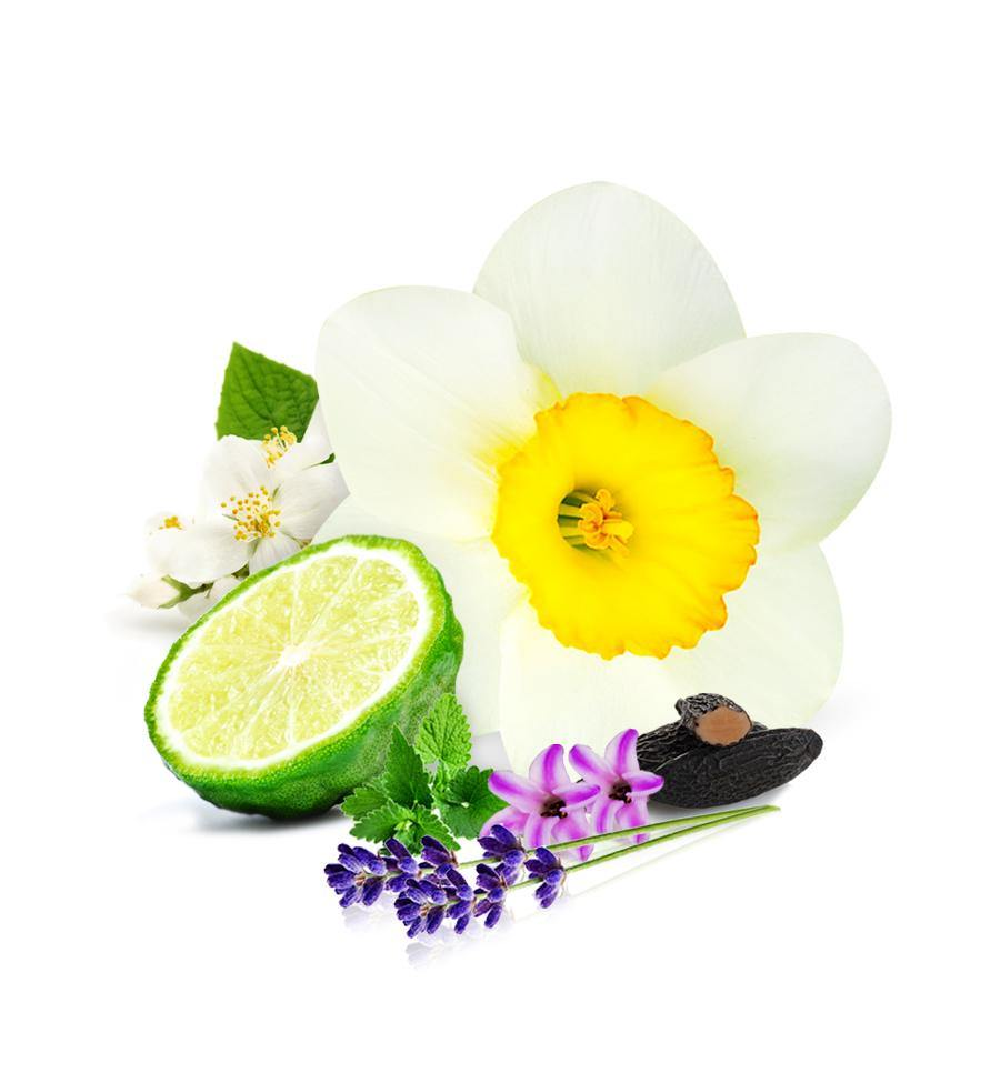 1. July Fragrance Oil Collection 6 x 30mls for $19.95