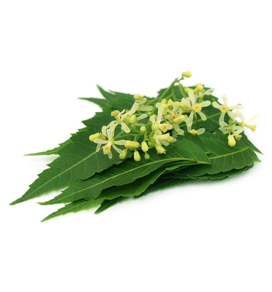 Neem Essential Oil - New Zealand Candle Supplies