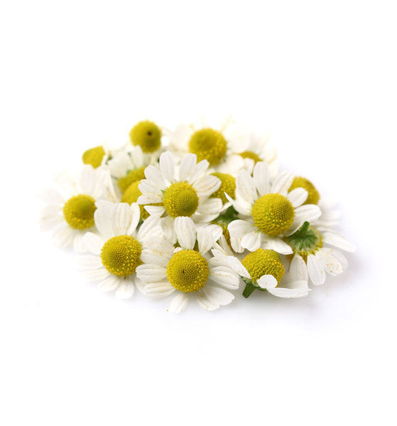 Chamomile Natural Fragrance Oil - New Zealand Candle Supplies