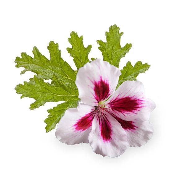 Rose Geranium Natural Fragrance Oil - New Zealand Candle Supplies