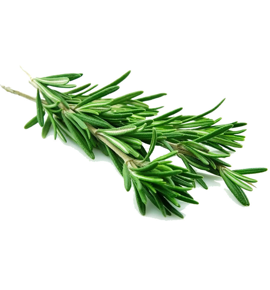 Rosemary Hydrosol - New Zealand Candle Supplies - 1
