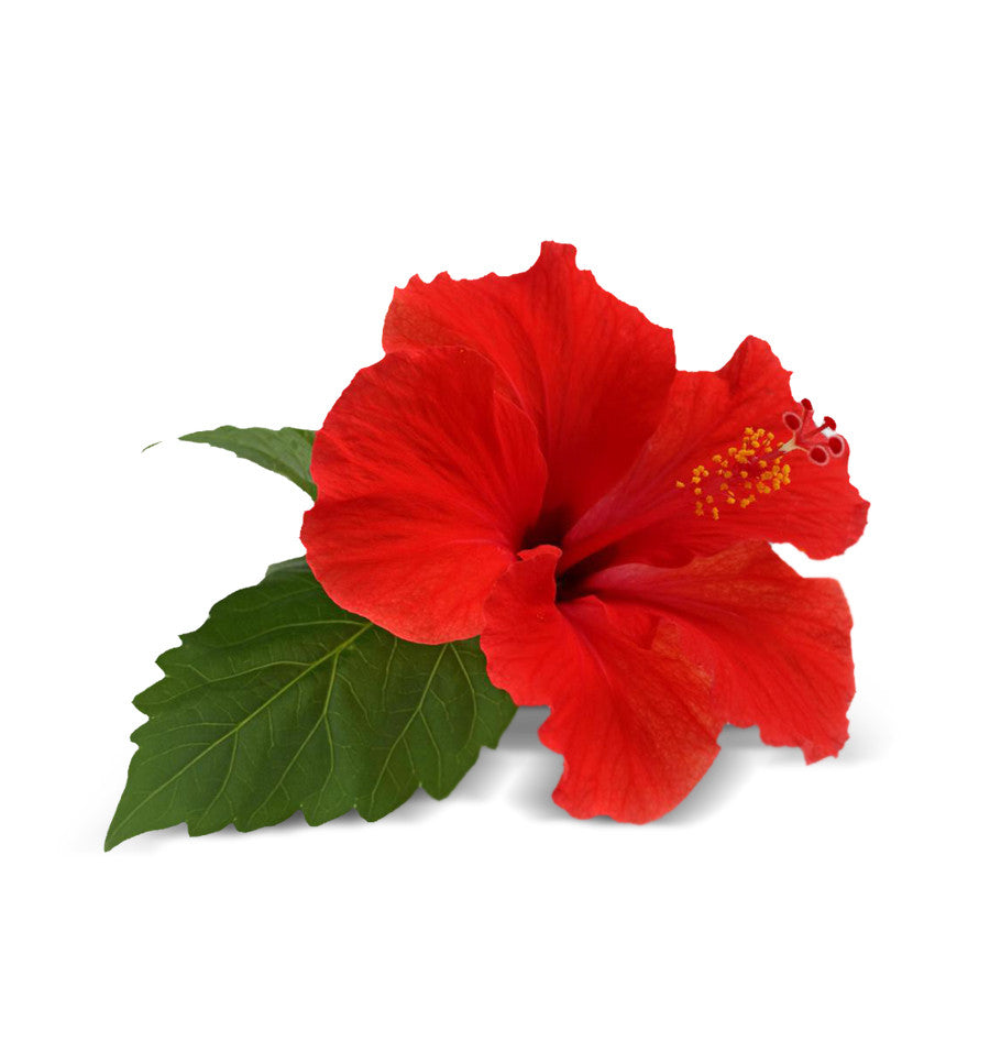 Make Soap Soy Wax Candles Hibiscus Fragrance Oil Shop Now Nz
