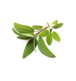 Sage Essential Oil - New Zealand Candle Supplies