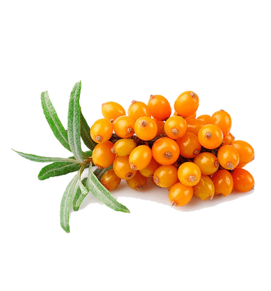 How to collect and store seabuckthorn