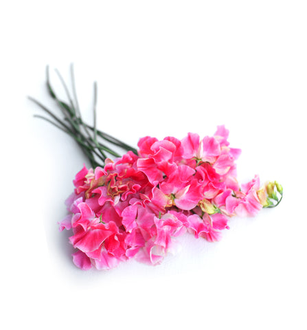 Sweet Pea and White Jasmine Fragrance Oil
