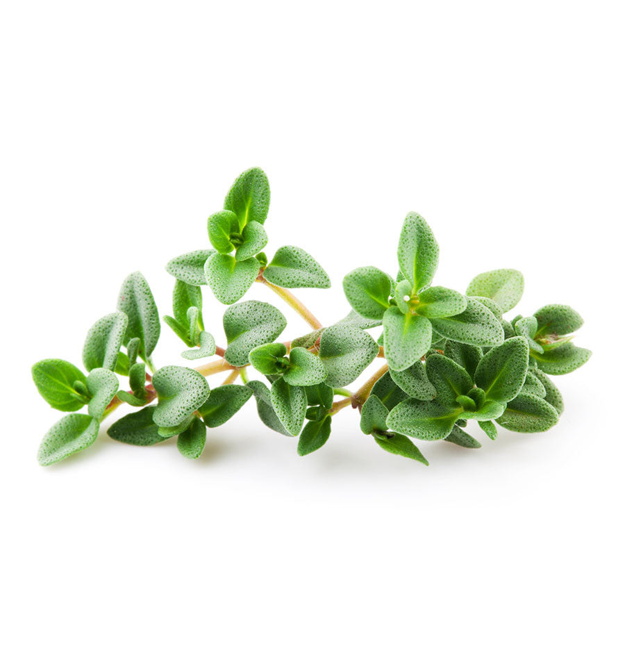 Thyme Essential Oil - New Zealand Candle Supplies