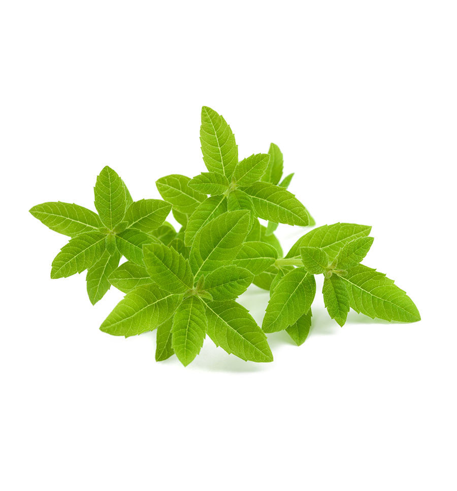 Lemon Verbena Essential Oil - New Zealand Candle Supplies