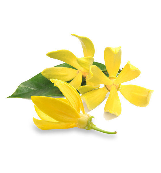 Ylang Ylang Essential Oil - New Zealand Candle Supplies