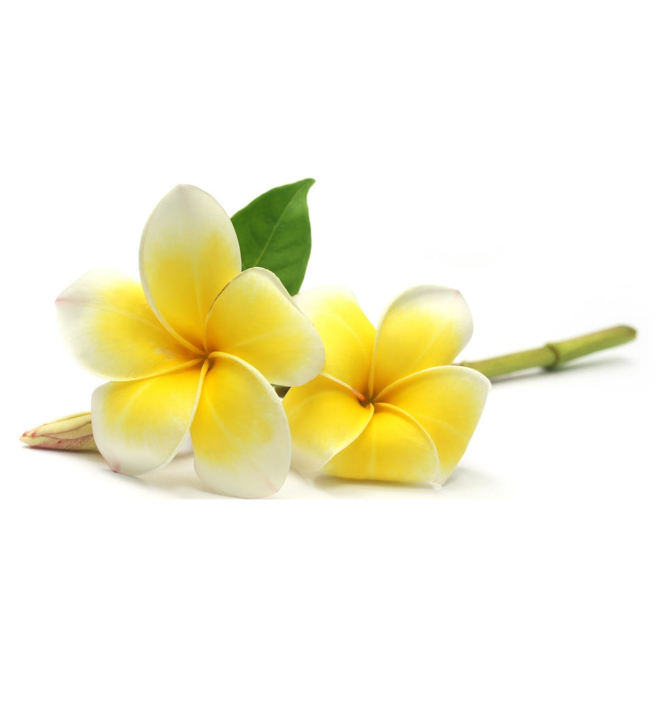 Frangipani Single Note Natural Fragrance Oil - New Zealand Candle Supplies