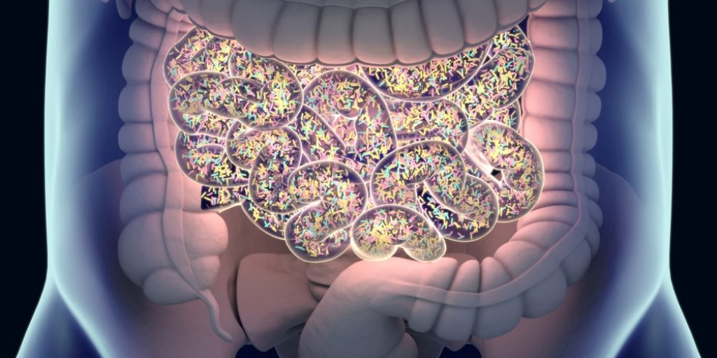 One More Small Piece of the  Puzzle on the Role of Gut Micro Organisms in MS