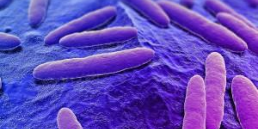 How to Own Your Gut Bacteria and Fix Leaky Gut Syndrome