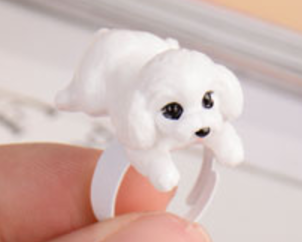 White Toy Poodle/ Bichon Ring