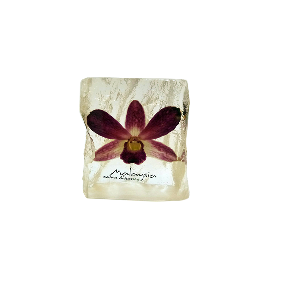 Preserved Dendrobium Orchid Paperweight - DC153