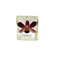 Preserved Dendrobium Orchid Paperweight