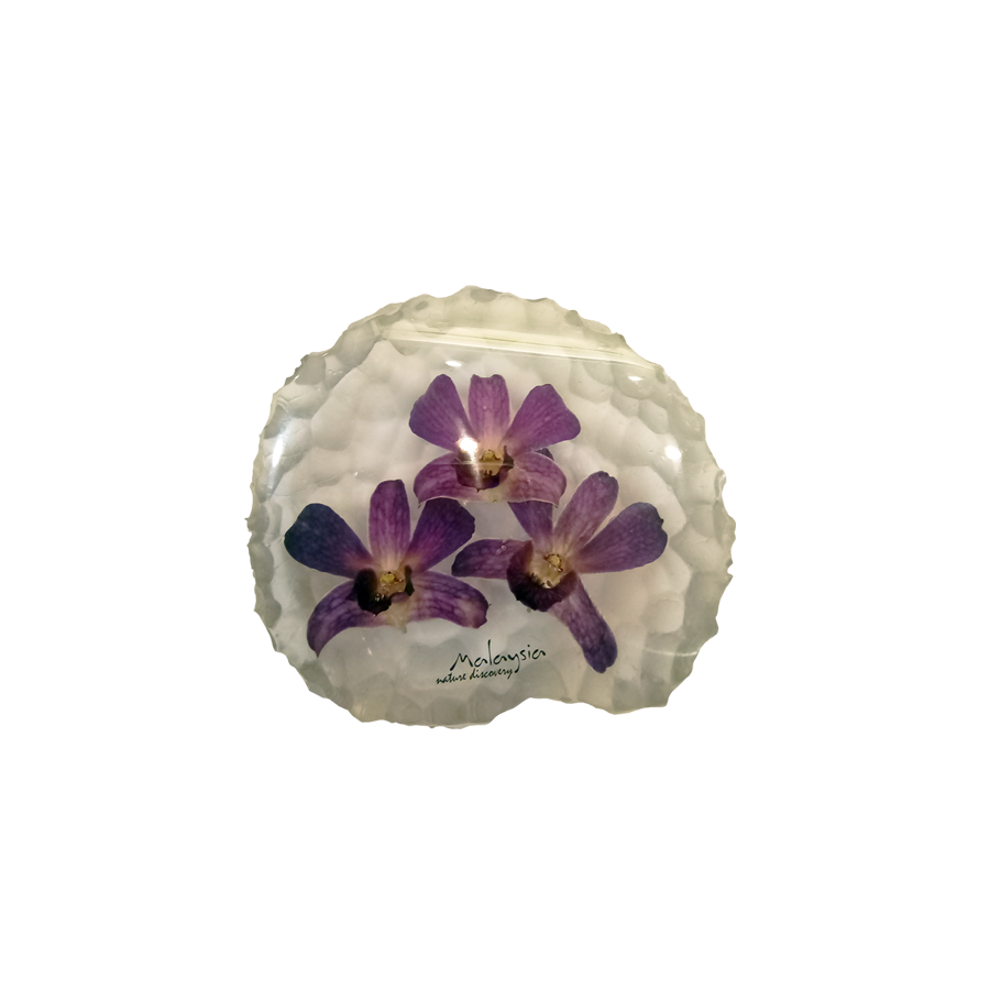 Preserved Dendrobium Orchid Paperweight - DC250