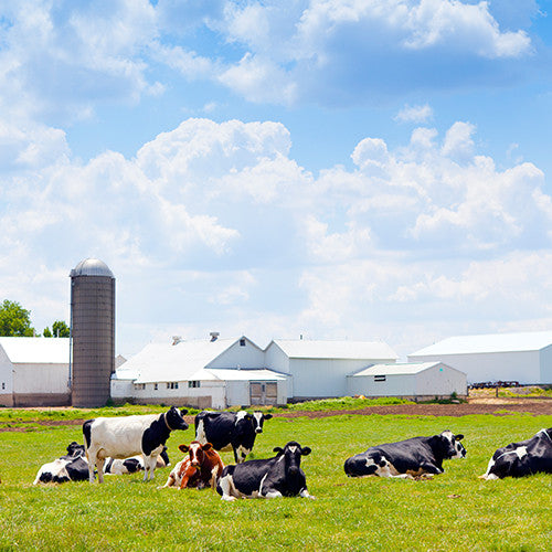 Sell Dairy Farm and Land on DairyDealer.com
