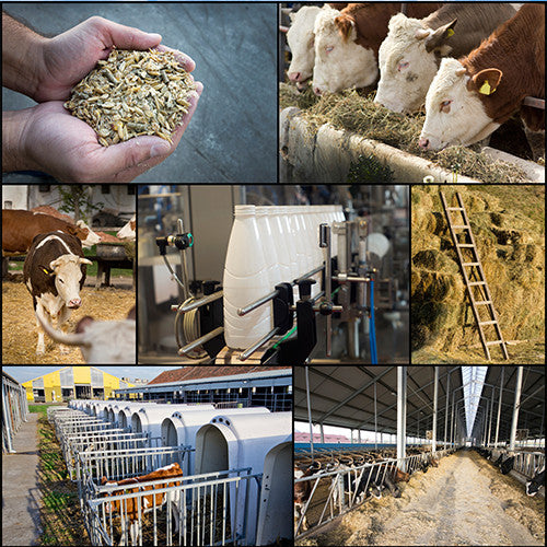 Sell Feed and Seed on DairyDealer.com