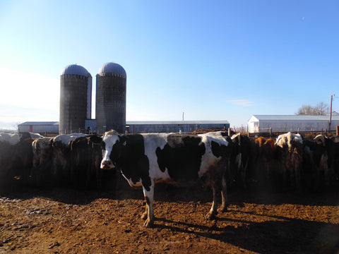 Listing #DD1189 - PRICE REDUCED Mixed Herd