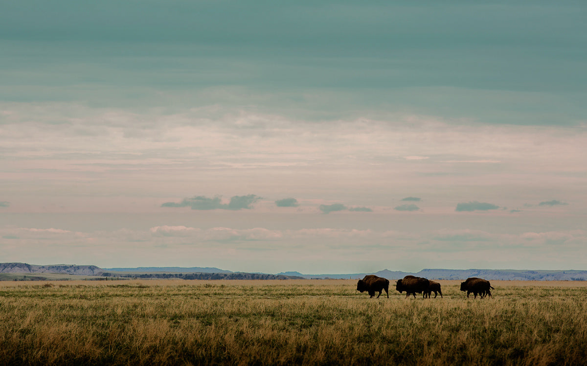 preserving the Great Plains ecosystem
