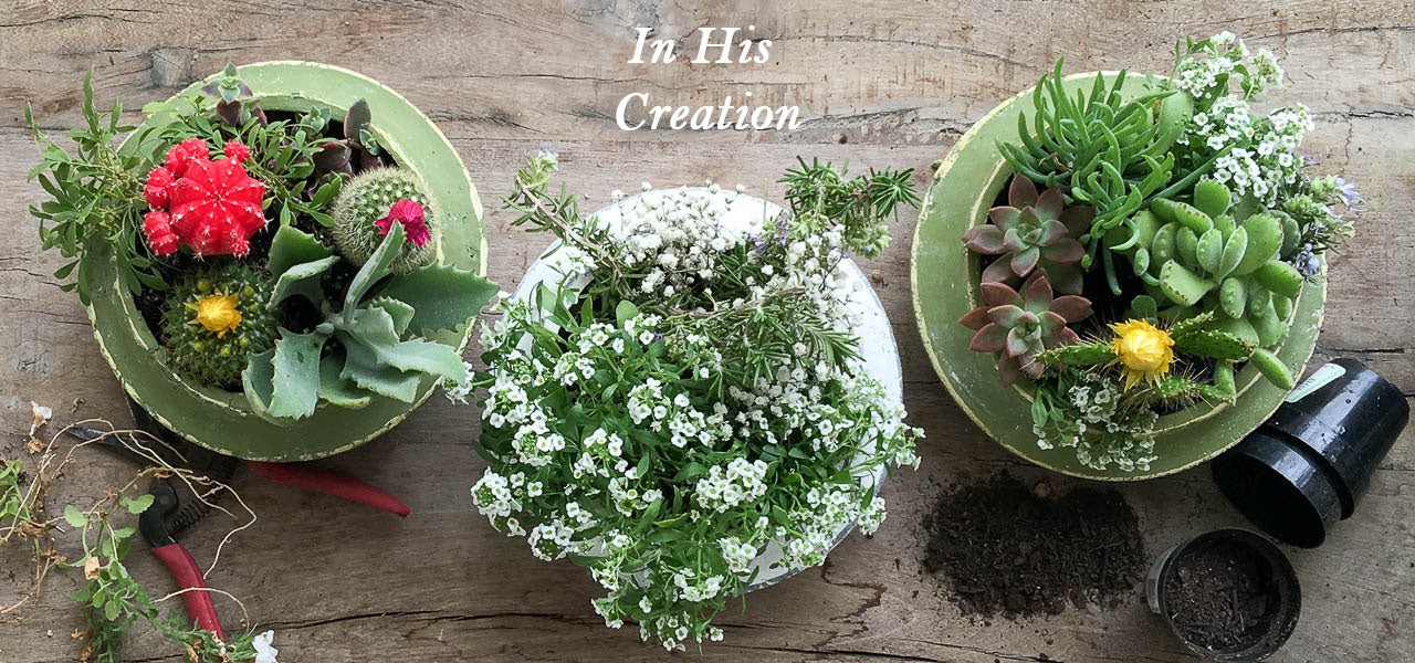 Simple life shallow cement planter pot lavish three 3