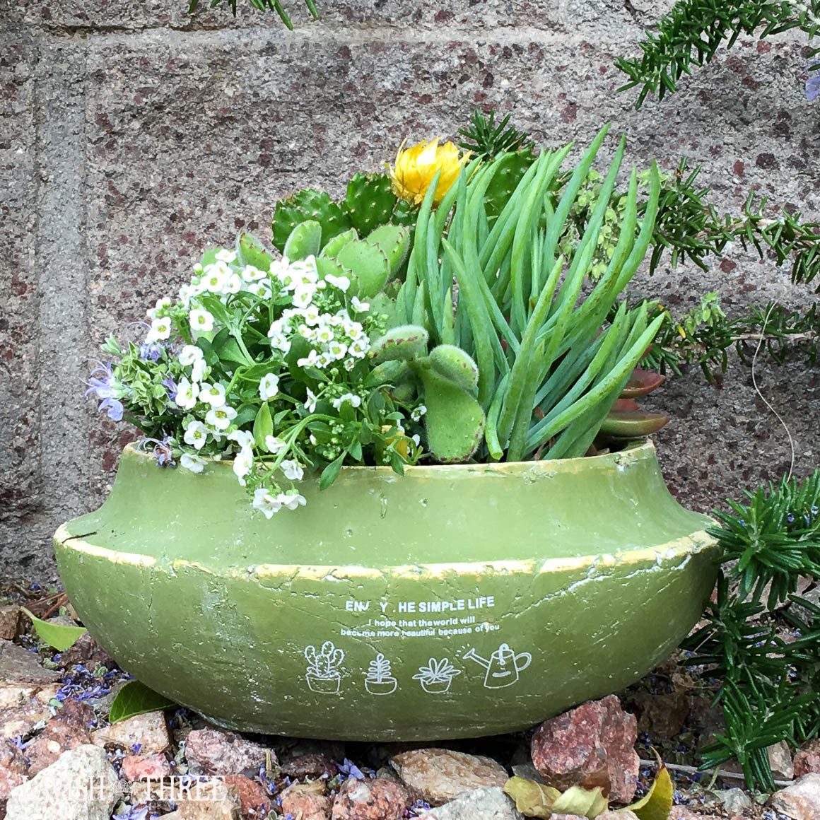 Green shallow cement planter garden pot succulent herb flower pot