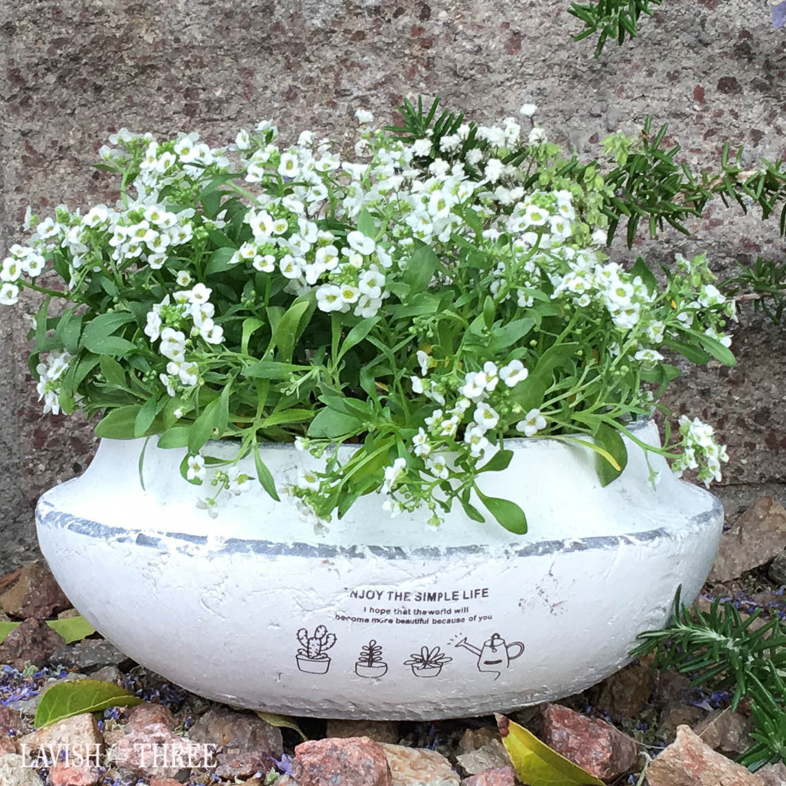 White green shallow cement garden planter flower herb succulent pot