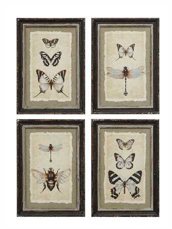Vintage look insect prints collage framed in distressed wood Lavish three 3