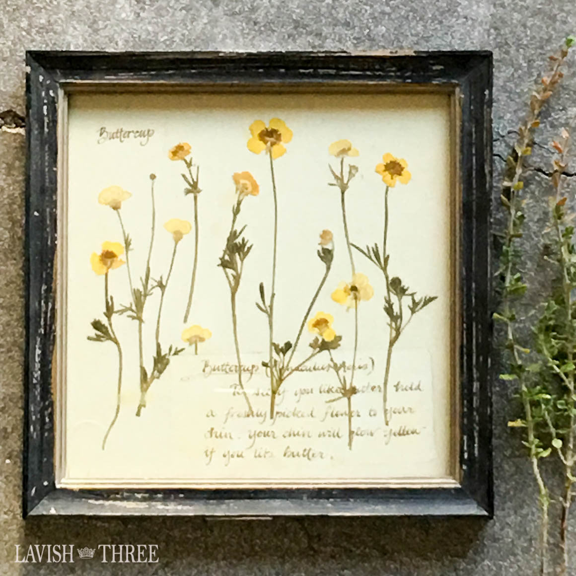 Sunny buttercup framed vintage botanical floral print wall art decor