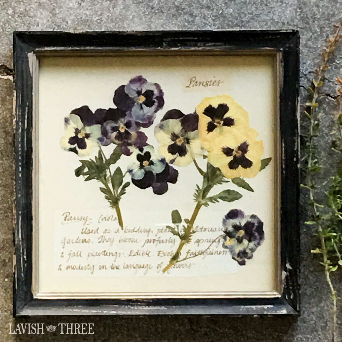 Perfect pansies framed vintage botanical floral print wall art decor