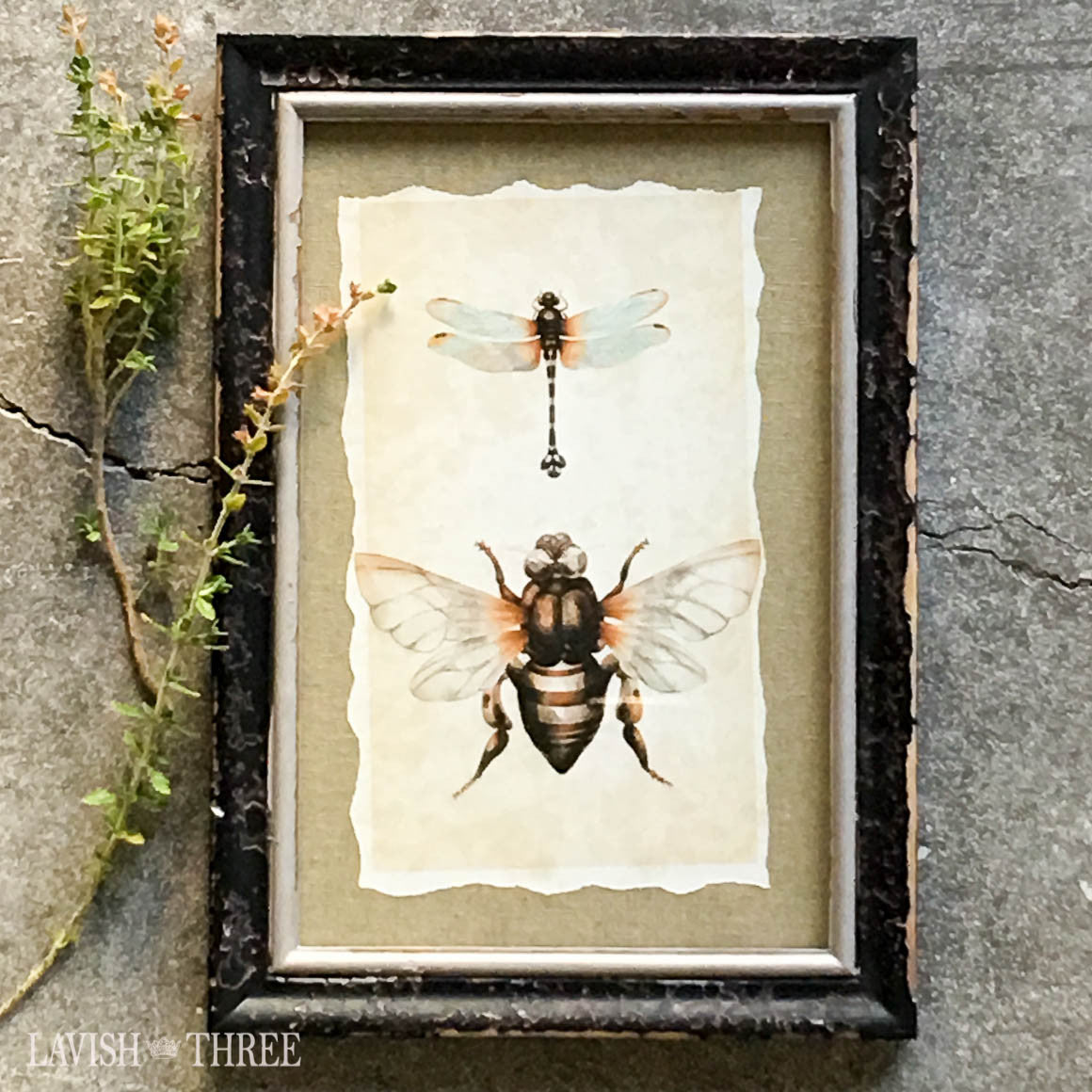 Distressed wood bumble bee dragonfly vintage look insect print