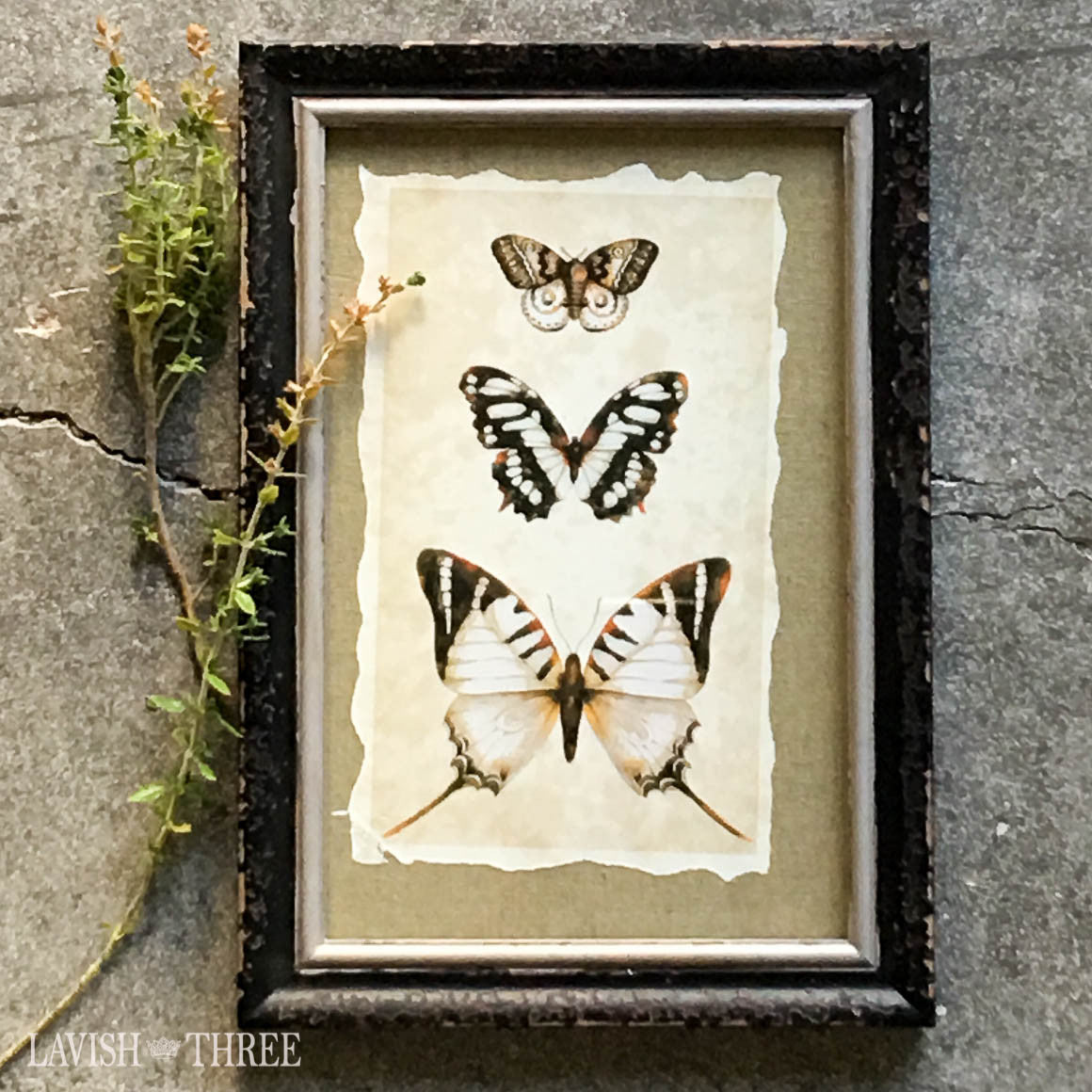 Butterfly moth insect print vintage distressed wood frame