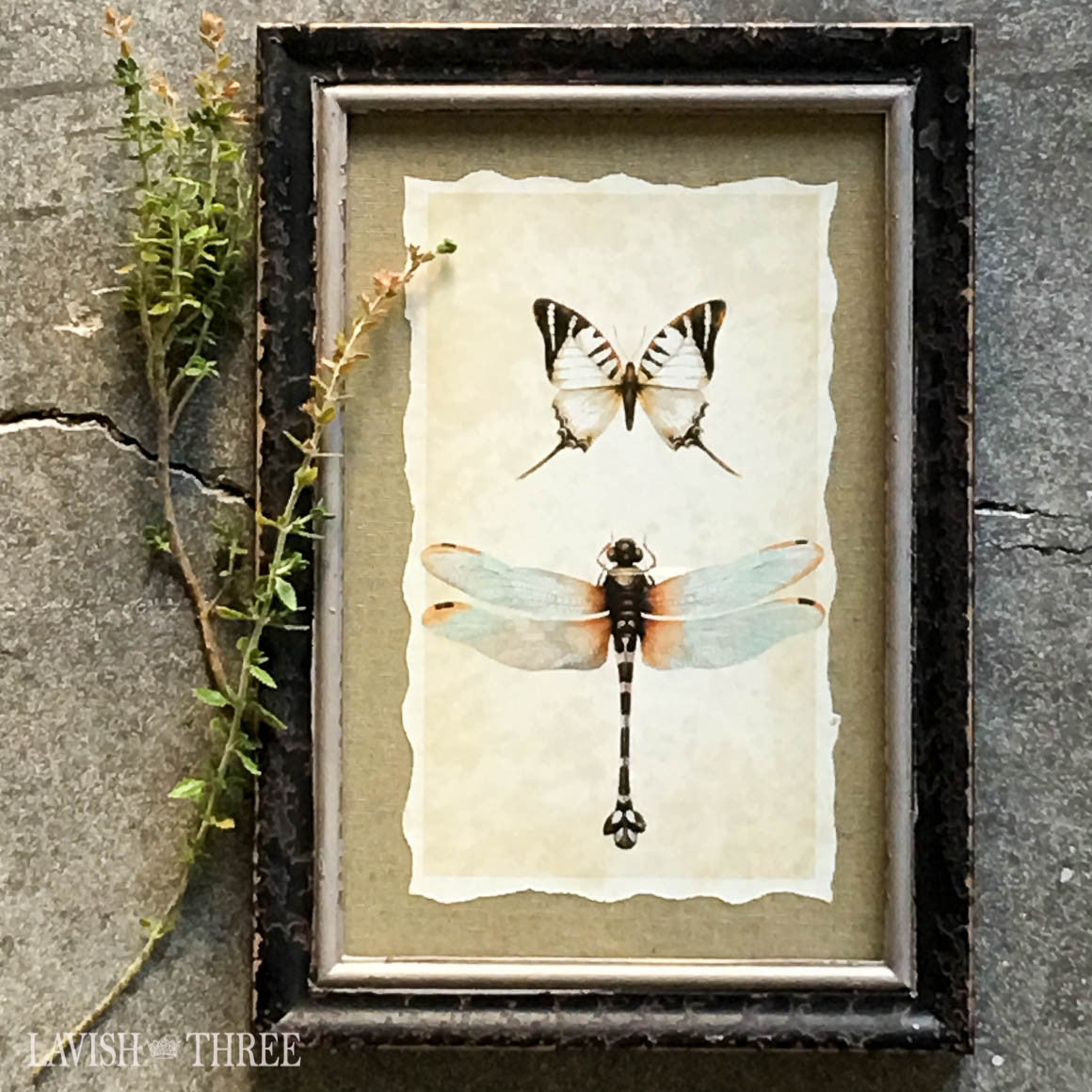Dragonfly butterfly insect vintage look framed shabby print wall art Lavish three 3