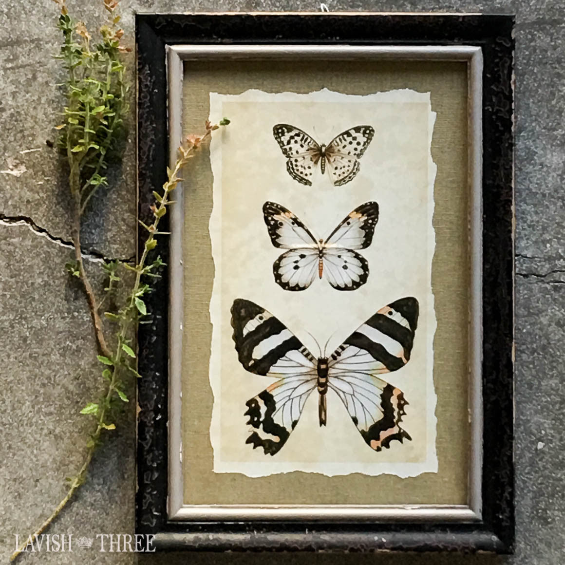 Distressed wood frame soft black butterfly vintage insect print wall decor