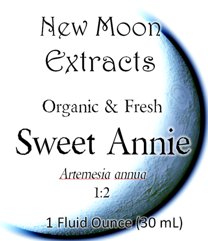 Sweet Annie Tincture (Organic, Fresh)