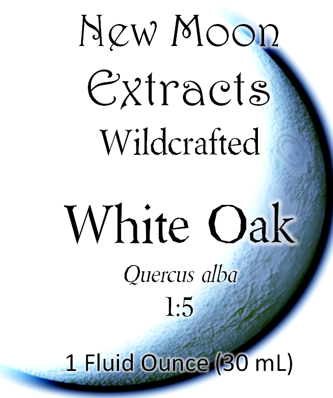 White Oak Tincture (Wildcrafted)