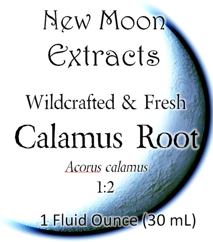 Calamus Root Tincture (Wildcrafted, Fresh)