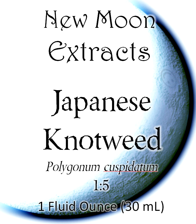 Japanese Knotweed Tincture