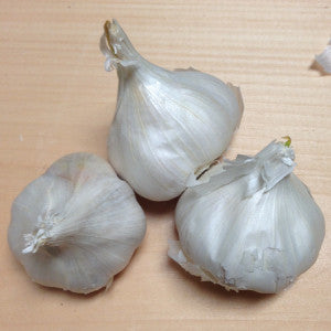 Organic California Early White Garlic