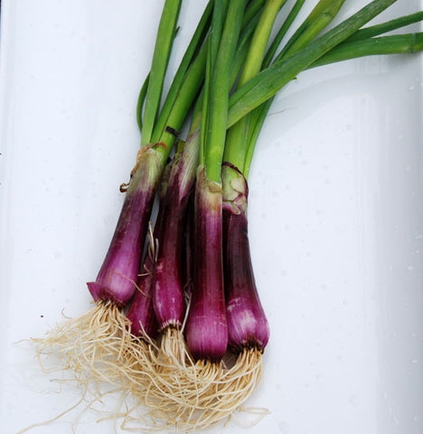 Crimson Forrest Bunching Onion