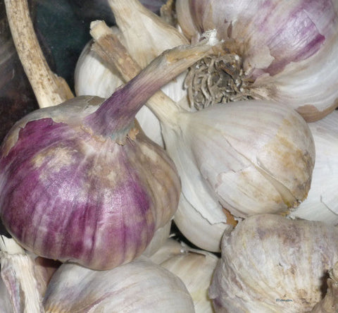 Organic German Red Garlic