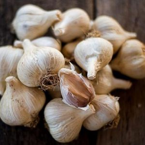 German Porcelain Seed Garlic